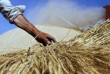 فقیر شدن کشاورزان طی ۱۰ سال گذشته