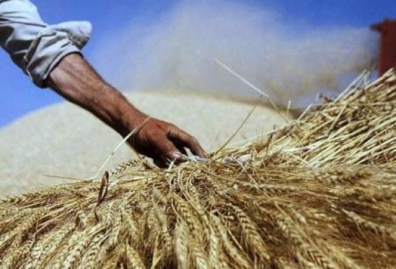 عدم توانایی بانک های خراسان شمالی برای کمک مالی به کشاورزان