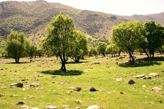 معامله با پیمانکاران؛ «زمین و منابع طبیعی» به جای دستمزد