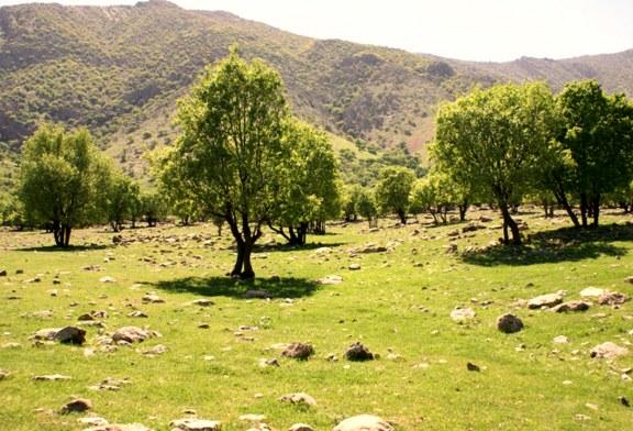 هر سال ٣هزار هکتار جنگل در ایران از بین میرود