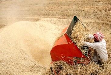 سالانه دهها هزار تن محصول کشاورزی خوزستان به هدر می رود.