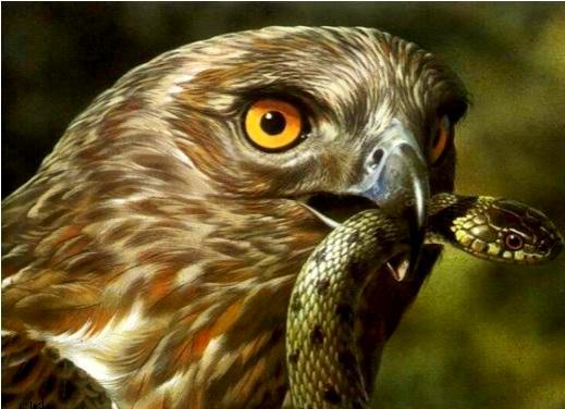 یک میلیون و ۳۰۰هزار گونه شکاری ایران به ۱۰۰ هزار کاهش یافته است
