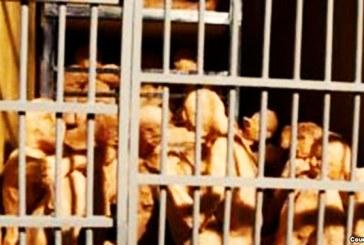 رشد صعودی بیماران زندانی احتمالا مبتلا به ویروس آنفولانزای خوکی در زندان مرکزی زاهدان