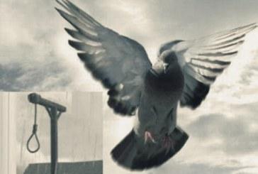 رهایی از قصاص ۱۳ نفر از محکومان اعدام در اردبیل