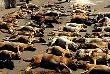 کشتار سگ های خیابانی توسط شهرداری در زارچ استان یزد