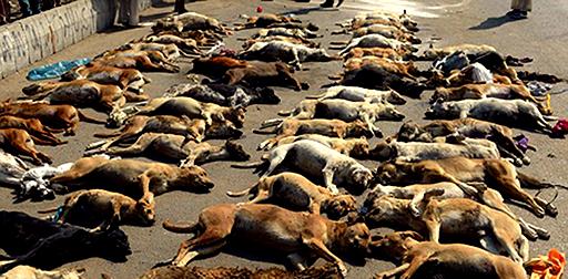 ۱۷۱ میلیون تومان برای کشتن سگ ها در مشهد!