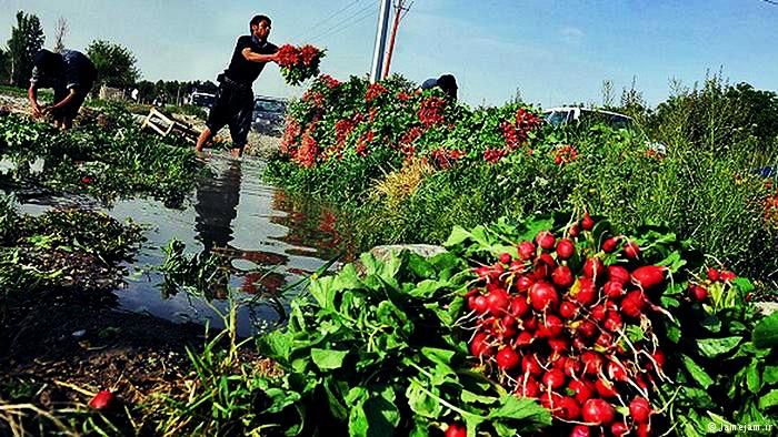 فاضلاب جنوب تهران، آلودهترین آب دنیاست