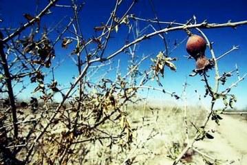 بحران خشکسالی در سه استان هرمزگان، کرمان و سیستان و بلوچستان