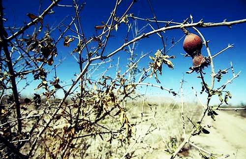 هشدار مدیریت بحران نسبت به خشکسالی در ۱۷ استان