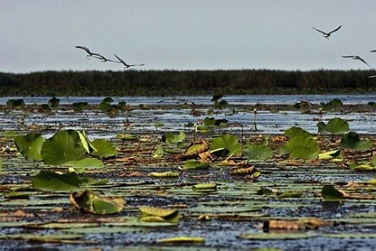 تالاب انزلی در لیست سیاه تالابهای تخریب شده کنوانسیون محیط زیست قرار گرفت