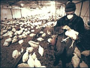 مرگ یک کارگر مرغداری در پی آتشسوزی