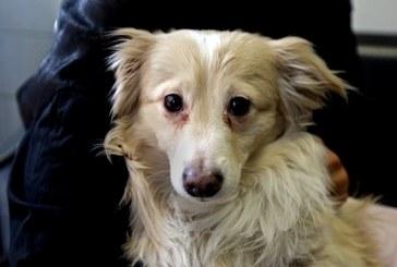 ۵۰ هزار تومان جریمه نگهداری سگ در منزل