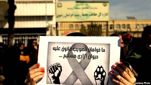 طرفداران حیوانات در ایران؛ امسال سال هیچ حیوانی نبود