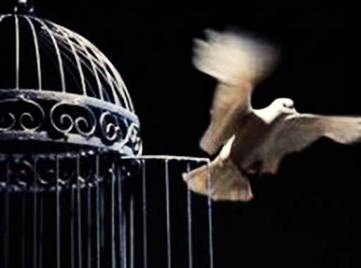پس از اتمام دوران حبس؛ حمید خوش سیر آزاد شد