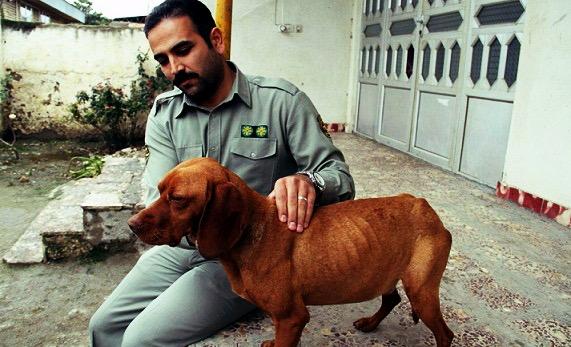 بی توجهی به قوانین مجازات حیوان آزاری، از مجلس ششم تا دولت یازدهم