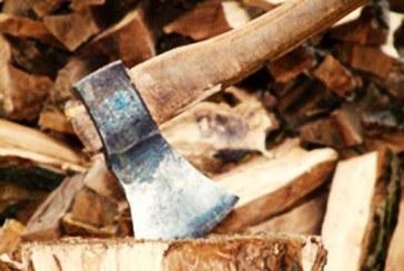 قطع ۶۰۰ درخت با احداث اتوبان شهید شوشتری