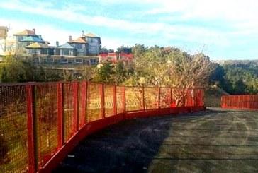 عضو شورای تهران: قطع درختان پارک جنگلی شیان برای ساخت پارکینگ