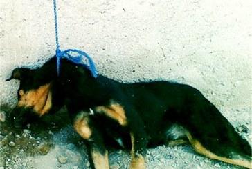 قتل عام ۵۰ قلاده سگ با ماده سمی در ملارد