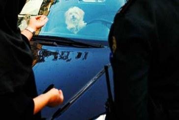 «ضبط سگهای خانگی در شاهینشهر»؛ پلیس و دادستانی تکذیب کردند