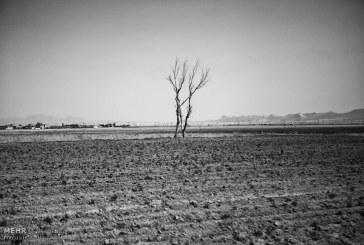 رئیس مرکز خشکسالی: «۹۵ درصد مساحت کشور درگیر خشکسالی است»