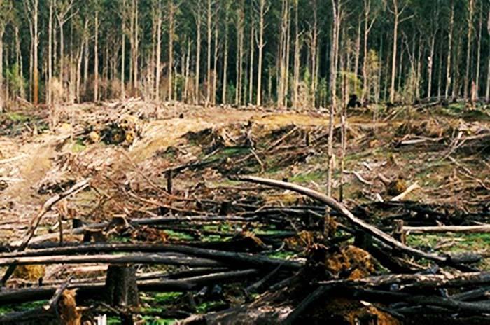 مرگ تدریجی جنگلها با انتقال آب رودخانه های مهم مازندران