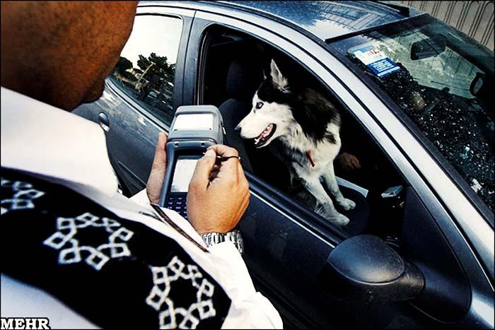 برخورد پلیس با همراه داشتن سگ در مازندران