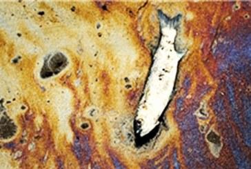 سرازیر شدن جیوه و فاضلاب صنعتی با بیمبالاتی به سواحل خوزستان؛ آلودگی ماهیهای صید شده در خور موسی به جیوه و مواد سمی