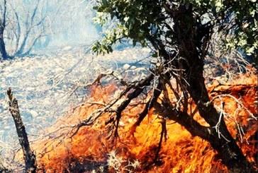 آتشسوزی در ۱۰ هکتار مرتع چلم کوه مازندران