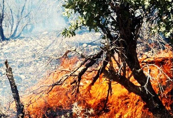یک هکتار از عرصه های منابع طبیعی گیلانغرب در آتش سوخت