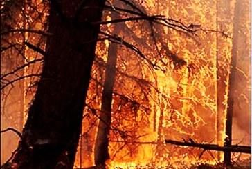سه هکتار از مراتع منطقه تاراز چهارمحال و بختیاری در آتش سوخت