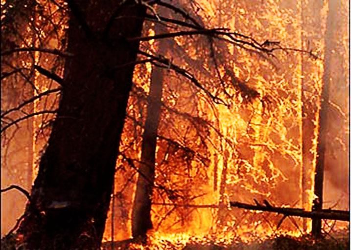 آتشسوزی در ۱۰۰ هکتار از اراضی جنگلی شمیرانات