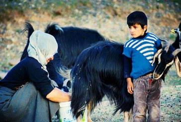 ناامنی غذایی ۹۰ درصد روستائیان ایران را تهدید میکند