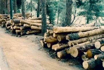 قطع صدها اصله درخت در پارک جنگلی چیتگر