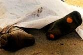 کشته و مصدوم شدن دو کارگر سنگبری در حین کار