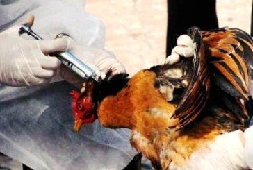 «مرگ بیش از پنج هزار پرنده» در اثر آنفلوآنزای H5N8 در اطراف تهران