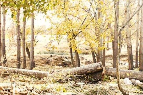 قطع شش هزار اصله درخت در شیراز بهدلیل جانمایی اشتباه در یک پروژه