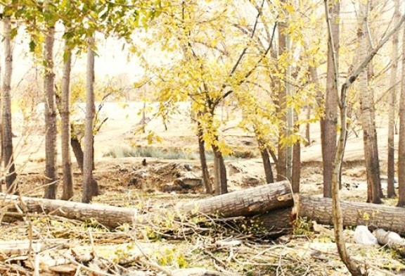 قتل عام صدها اصله درخت در اهواز در سایه سکوت مسئولین