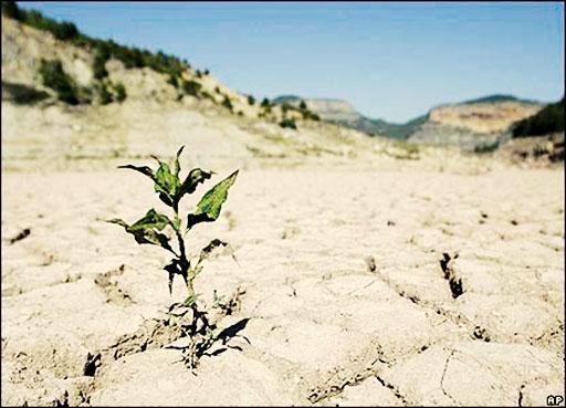 ۳۰۰ هزار هکتار از اراضی گلستان در معرض بیابانی شدن است