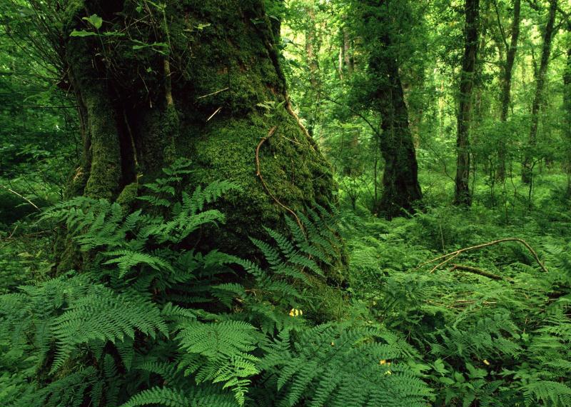 هشدار در مورد احتمال نابودی جنگلهای هیرکانی در یکی دو دهه آینده
