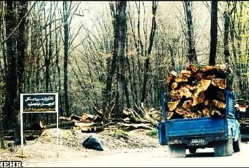جنگلخواری قانونی