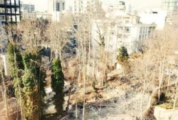 قطع درختان در خیابان فرشته تهران