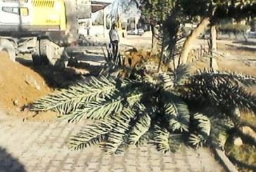 تخریب فضای سبز در اهواز به دستور شهرداری علیرغم آلودگی هوا