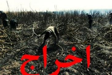 هفتاد کارگر روزمزدی «نیشکر هفتتپه» پیش از موعد اخراج شدند