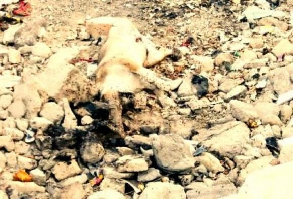 وضعیت نامساعد بهداشتی در شهرهای استان سیستان و بلوچستان/ تصاویر