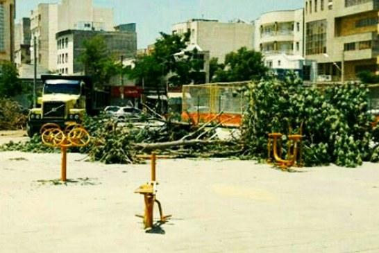 قطع درختان در پارک آذربایجان اردبیل