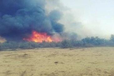 آتشسوزی در جنگلهای الوار اندیمشک