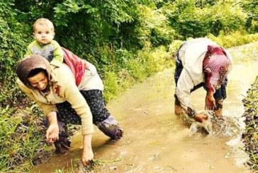 """شالیکاران گیلانی به """"بیجار"""" فروشی افتادهاند/۱۱ میلیون کشاورز زمینهای خود را ازدستدادهاند"""