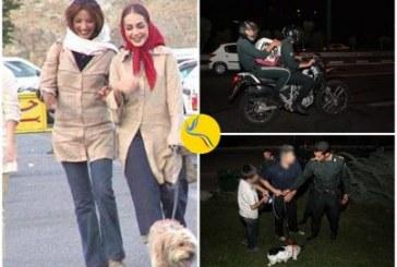 برخورد با «سگ گردانان» در امکان و معابر عمومی زنجان